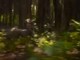 'El libro de la selva' (The Jungle Book) - Segundo trailer