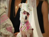 Beverly Hills Chihuahua (Theatrical Trailer)