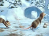 Ice Age: Dawn of the Dinosaurs (That Is One Angry Fossil)